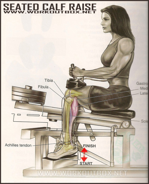 Calf Exercises: How to Seated Calf Raise