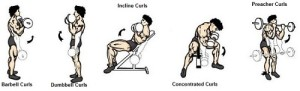 Biceps workout training for workout at home biceps curls incline curls preacher curls concetrated dumbbell barbell personal trainor online
