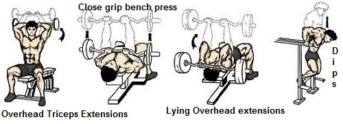 Tricep Cable Pressdown Overhead Extensions Training Tips Close Grip Bench Press Dips Lying Triceps Workout Big