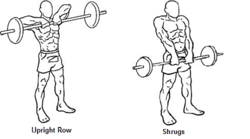 Traps workout tips shrugs upright row online personal trainor