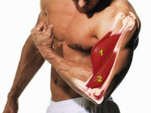 Biceps Workout Tips