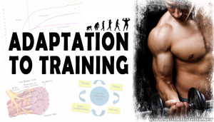 ADAPTATION TO TRAINING