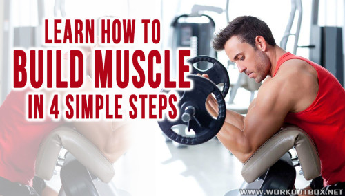Learn How To Build Muscle In 4 Simple Steps