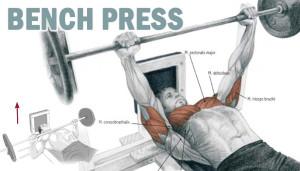 Bench Press !