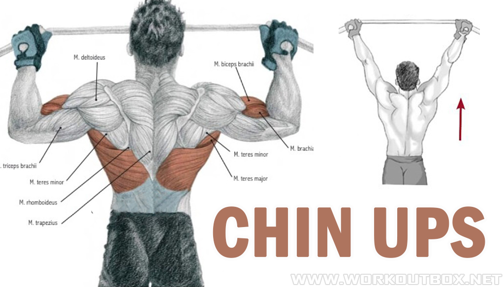 How To Chin Ups | Fitness Workouts & Exercises