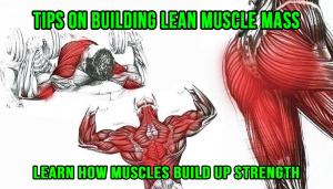 Tips On Building Lean Muscle Mass