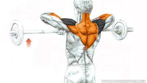 Barbell Upright Row