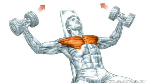 Chest Exercise Incline Dumbble Fly