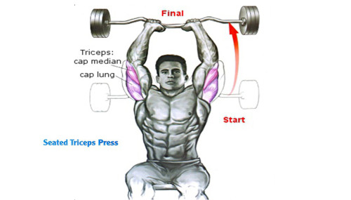 How To Seated Triceps Press