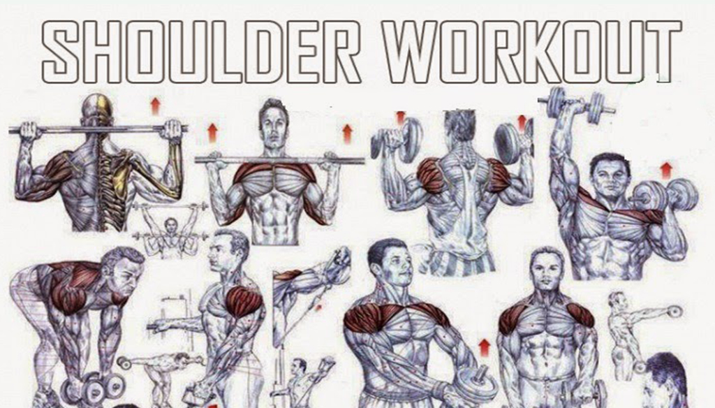 The Best Shoulder Exercises For Mass | Fitness Workouts