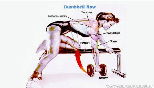 How To Dumbbell Row