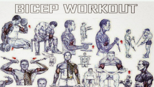 The Best Biceps Exercises For Size