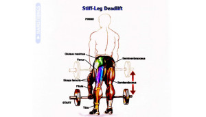 How To Stiff-Leg Deadlift