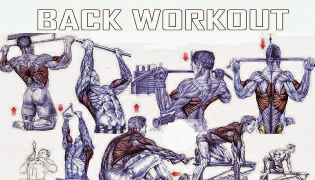 The Best Back Exercises For Mass