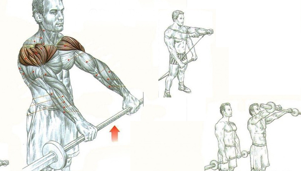 BARBELL FRONT RAISES | Fitness Workouts & Exercises