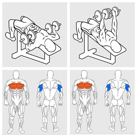 Dumbbell Incline Bench Press Chest Workout