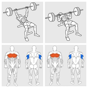 Bench Press Chest Workout
