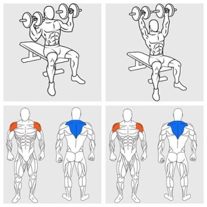 Dumbbell Shoulder Press Shoulder Workout