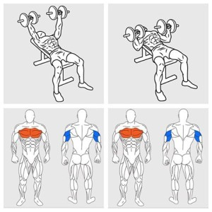 Dumbbell Bench Press Chest Workout