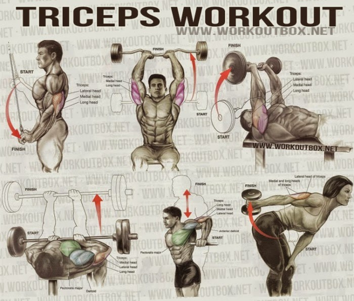 The Best Triceps Exercises for Mass | Fitness Workouts ...