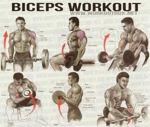 Exercises for Best Biceps Workout