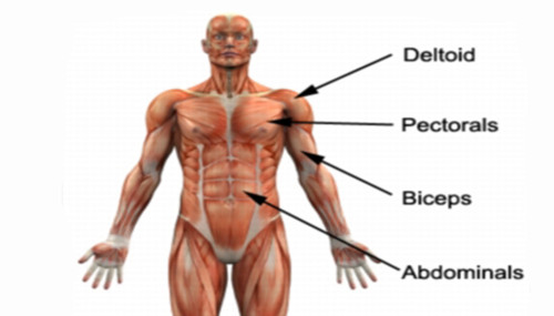 Awesome Upper Body Muscle Building Exercises