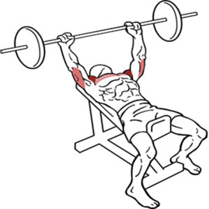 Top 7 Chest Exercises to Build Muscle