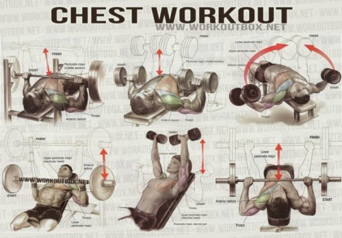 5 Exercises to Build Chest Muscle Fast