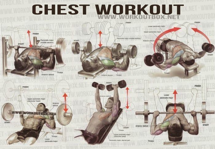 Excercises To Build Pectoral Muscles