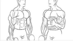THE TOP 5 EXERCISES FOR INCREASING BICEP MASS