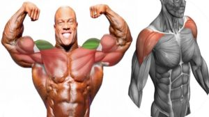 The 4 Best Ways to Build Shoulders