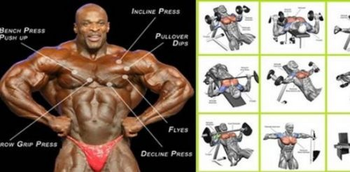 Best Chest Exercises for Developing Full Muscular Pecs