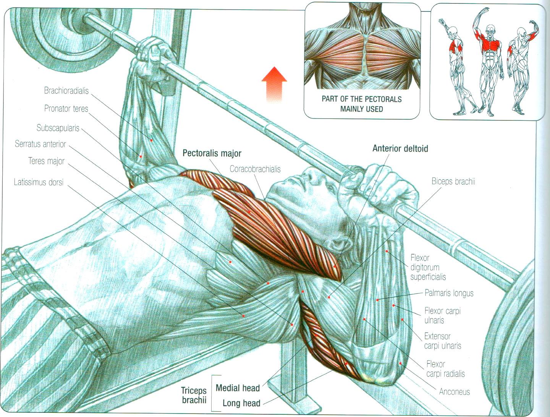 Best Chest Exercises for Developing Full Muscular Pecs | Fitness ...