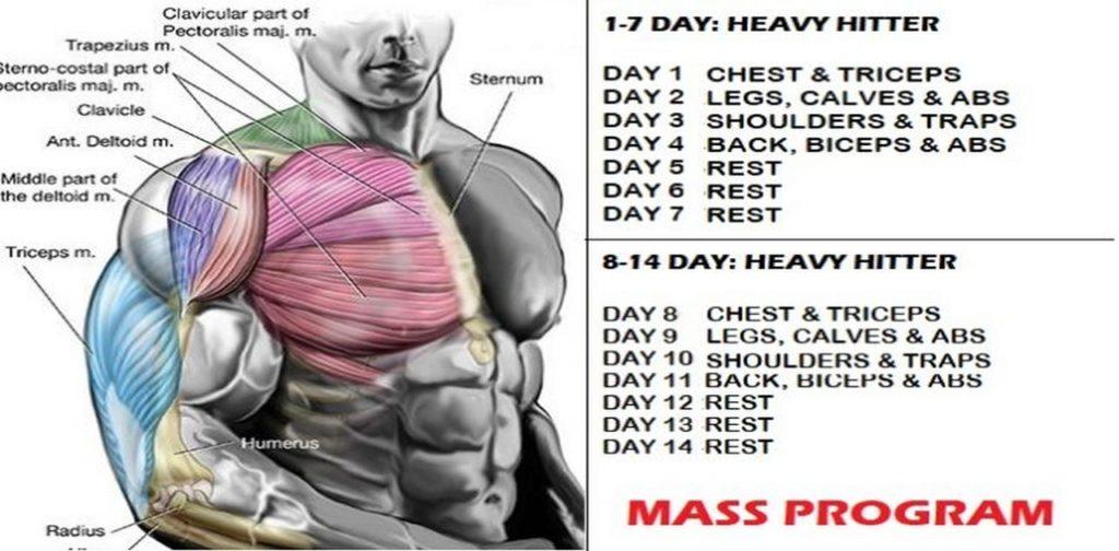 Image result for HEAVY HITTER exercises