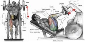 The 4 Best Leg Machine Exercises
