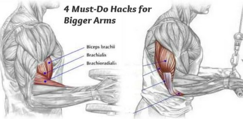 4 Must-Do Hacks for Bigger Arms!!!