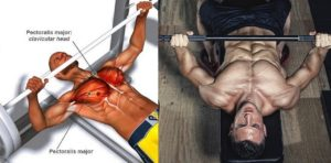 7 Reasons Why Your Bench Press Is Weak
