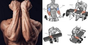 Build Powerful Forearms – The Top 5 Exercises For Massive Forearms