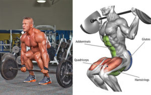 Deadlift vs Squat Which Exercise is Better