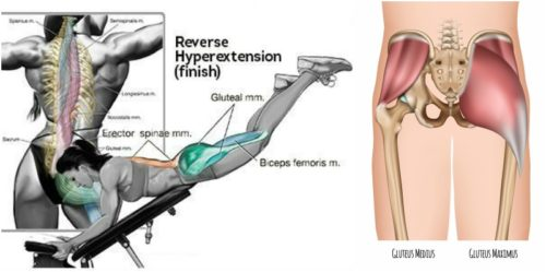 Reverse Hyperextension for Building Bigger Glutes