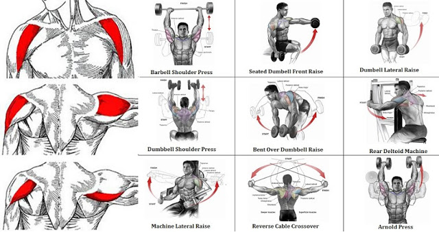 Diagrams Of Shoulder Exercises Wiring Circuit