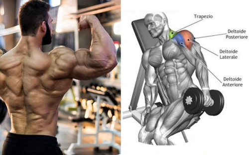 The Only 3 Exercises You Need To Do To Develop Monstrous Delts