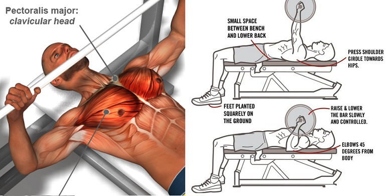20 Tips To Improve Your Bench Press Strength