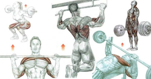 5 Essential Muscle Building Exercises
