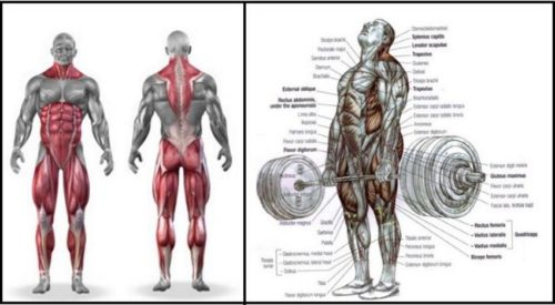 8 Deadlift Variations – Benefits And How To Perform Each