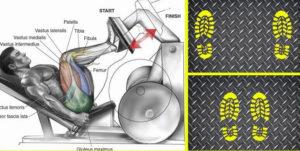 6 Leg Press Foot Variations for Total Leg Training