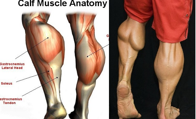4 Best Calf Exercises To Get Diamond Shaped Calves Fitness