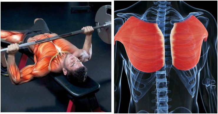 Advanced Bench Press Program For Strength And Size Fitness