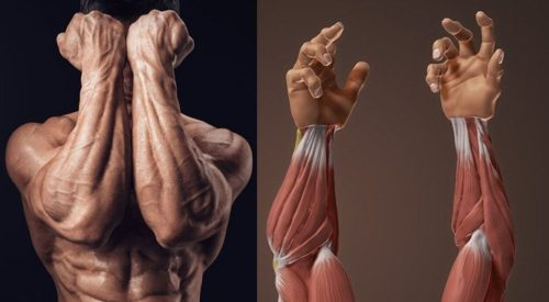 4 Powerful Workouts For Bigger Forearms