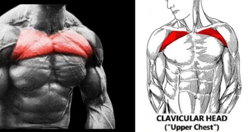 5 Exercises To Build The Upper Chest